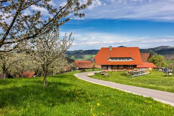 moderner Bauernhof im Frühling, Schwarzwald