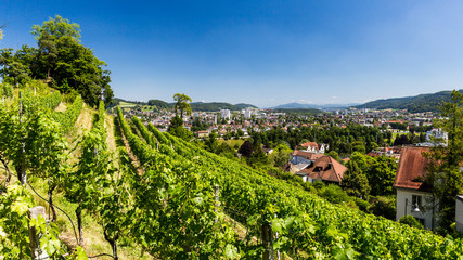 BADEN, AARGAU, SWITZERLAND - JUNE 30, 2015: Vineyard from top to the city of Baden on June 30, 2015. Baden is a municipality in the Swiss canton of Aargau, located 25 km (16 mi) northwest of Zurich.