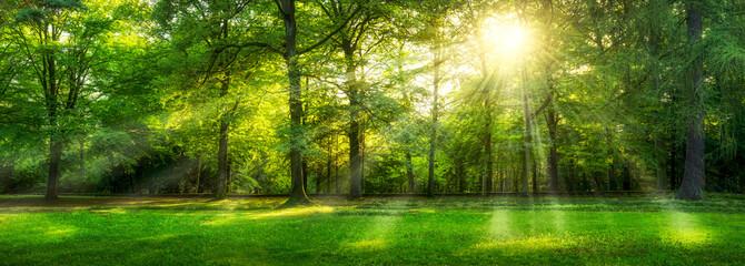 Grünes Wald Panorama im Sommer mit Sonnenstrahlen