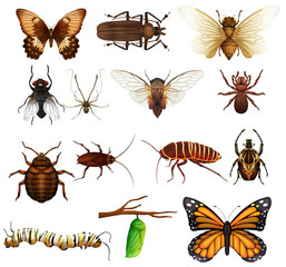 Different kind of wild insects