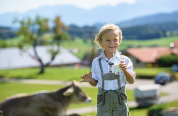 Happy Bavarian boy  drink milk on the meadow with cow . Alps in background . Germany .