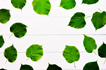 Background of white boards and green leaves