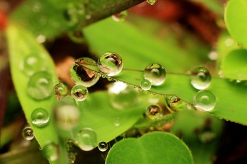 Macro photography showing water droplets