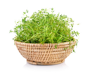 Fresh thyme in basket on white background