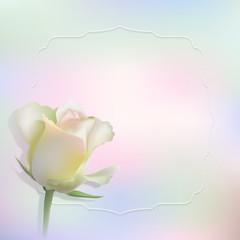 Delicate vector rose