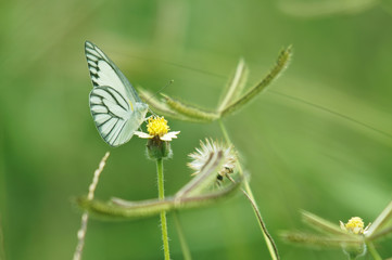 butterfly and flower with green background.