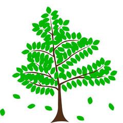 deciduous tree, beech