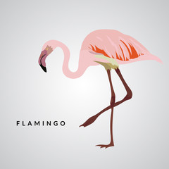 Flamingo vector illustration