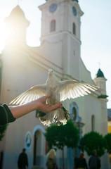 Dove on man's hand