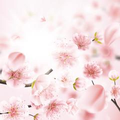 Cherry blossom, sakura flowers. EPS 10