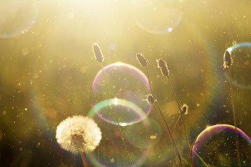 Beautiful nature background with soap bubbles