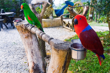 Bright parrots parks in Asia