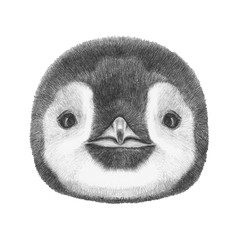 Portrait of Penguin. Hand drawn illustration.