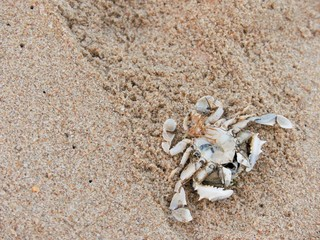 Dead Crabs on the Sand