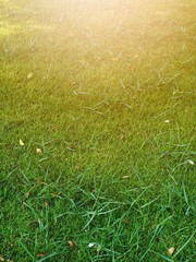 Green lawn with sunny days