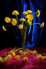 Still life with yellow dandelions