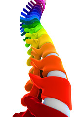 Colorful Human Spine Anatomy