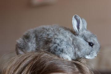 Little grey bunny rabbit