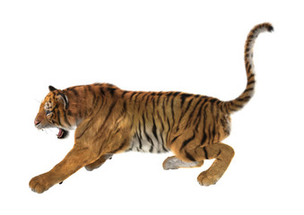 3D Rendering Tiger on White