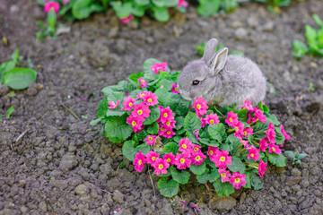 Little grey bunny rabbit in the flowers in the garden