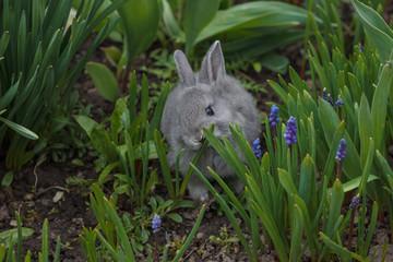 bunny rabbit eating grass in the garden