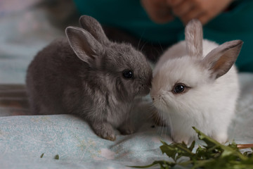 Two little adorable bunny rabbits