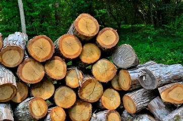 Wood logs cut and ready to split for firewood