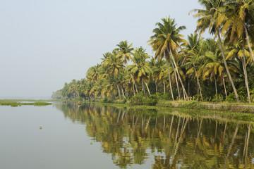 Palm trees at water's edge, Kerala, India