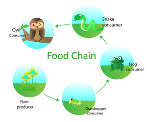 Food Web Stock Photos And Royalty Free Images Vectors And