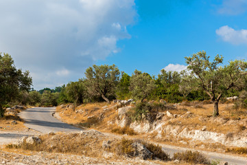 Road among olive trees near Jerusalem