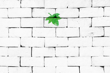 Green maple leaf painted on sorted white brick wall