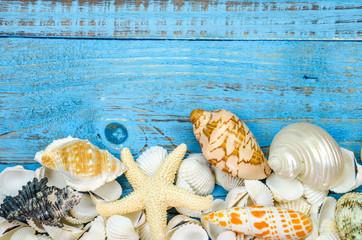 Seashells on wood painted blue background.