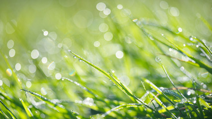 Bright green grass with morning dew droplets
