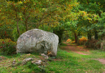 Ancient menhir granite stone in a deciduous oak forest in Carnac, France
