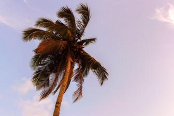 An image palm trees in the blue sunset sky