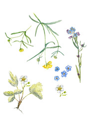 set the wildflowers. Set of watercolor drawing wild flowers. color drawing floral set.