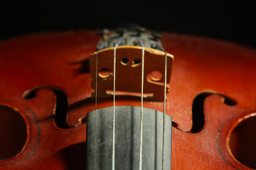 the strings of the violin closeup