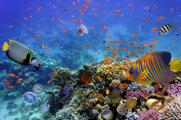 Coral Reef and Tropical Fish in the Red Sea