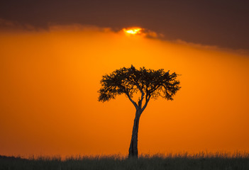 Wall Mural - Sunset in the Maasai Mara National Park. Africa. Kenya