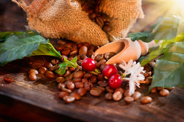 Wall Mural - Coffee beans, flowers and berries on wooden table closeup