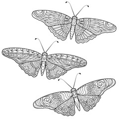 Butterfly anti stress coloring pages in doodle style. Ornamental patterned illustration for tattoo, poster or print