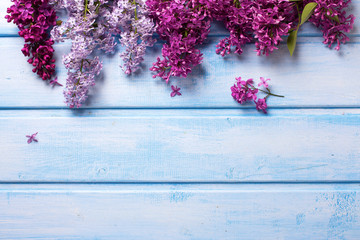 Border from  fresh aromatic lilac flowers on blue wooden planks.