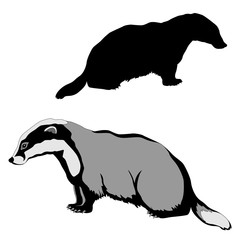animal badger black silhouette realistic