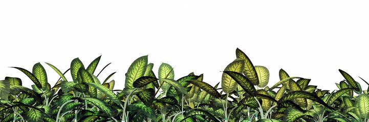 Tropische Pflanzen – Freisteller
