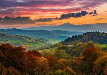 autumn forest on a  mountain hill at sunset