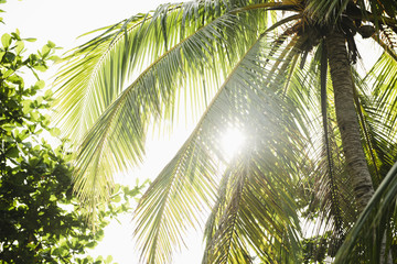 Low angle view of palm trees and foliage in sunlight, Cebu, Philippines