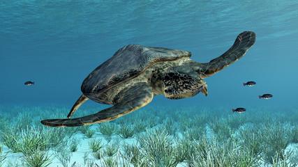 Meeresschildkröte Archelon