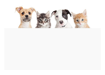 Wall Mural - Banner of puppies and kittens over blank sign