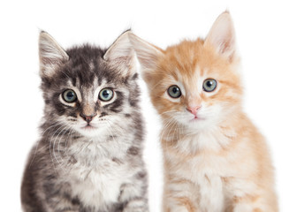 Closeup Two Cute Tabby Kittens