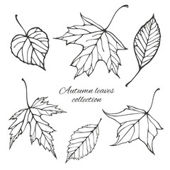 Set of outline autumn leaves